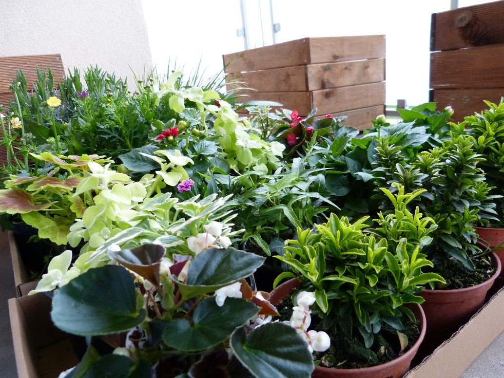 5 Tips for a Great Balcony Garden
