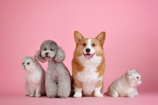 Search Tips for Pet Friendly Apartments
