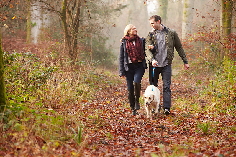 Fun Fall Activities With Your Pets